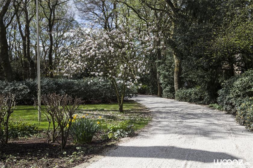 Slingerbosch in Huizen - Domus Magnus (1)